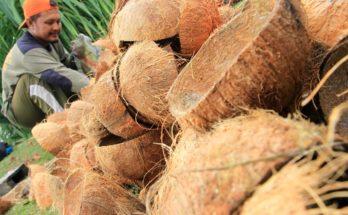 Ekspor Coconut Charcoal